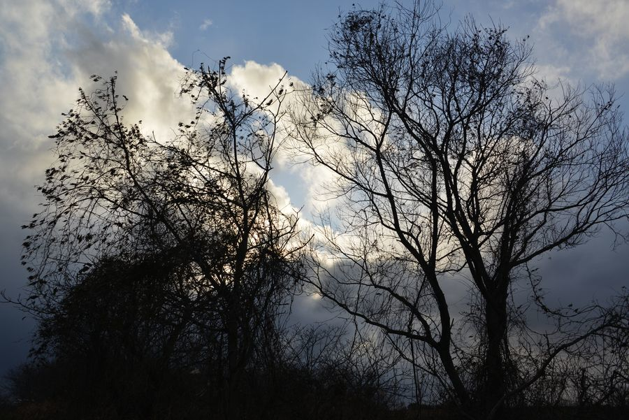 冬の樹-1
