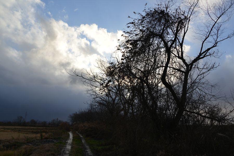 冬の樹-2