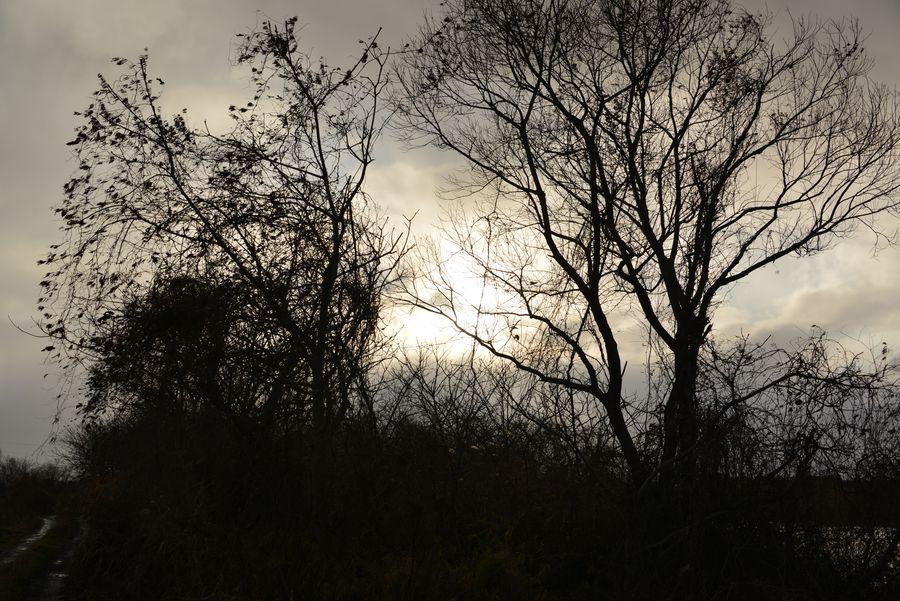冬の樹-4