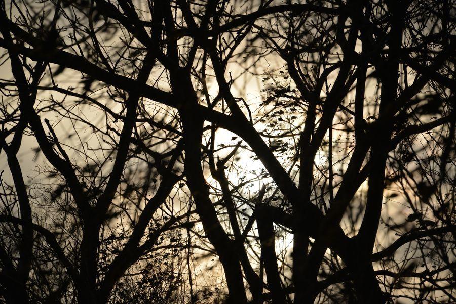 冬の樹-6