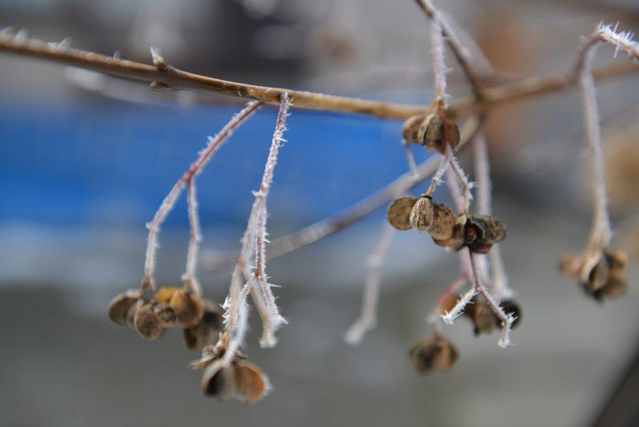 小さな冬-2