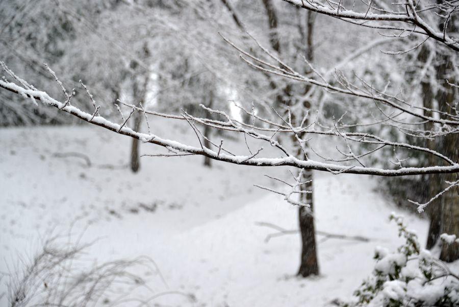 雪と樹-1