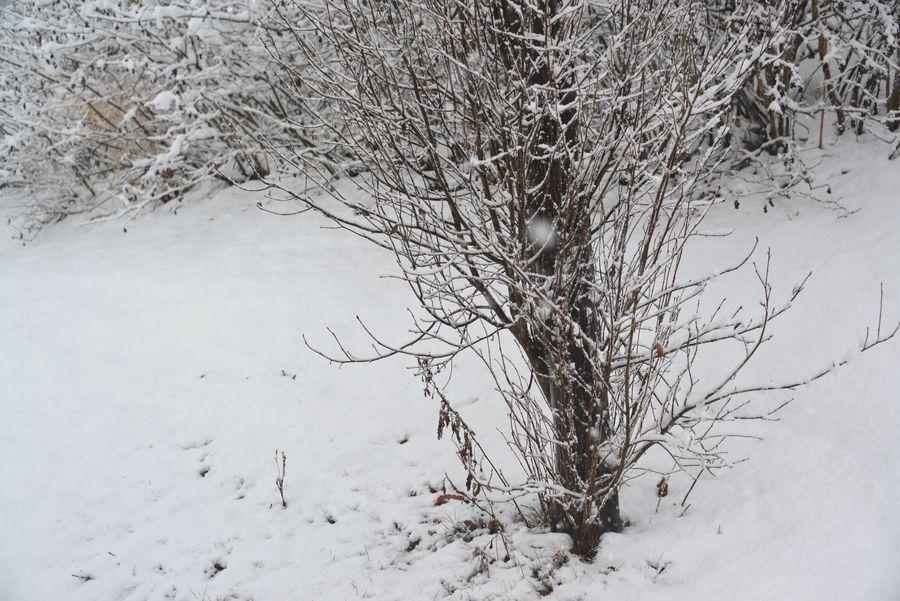 雪と樹-2