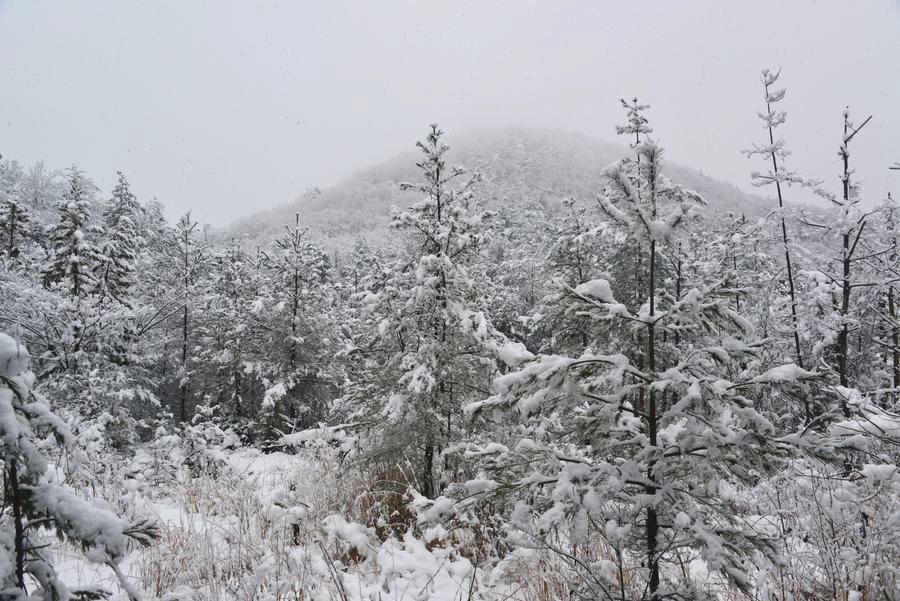 雪と樹-3