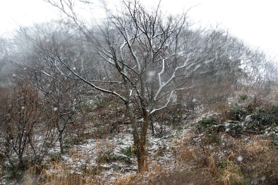 雪と樹-4
