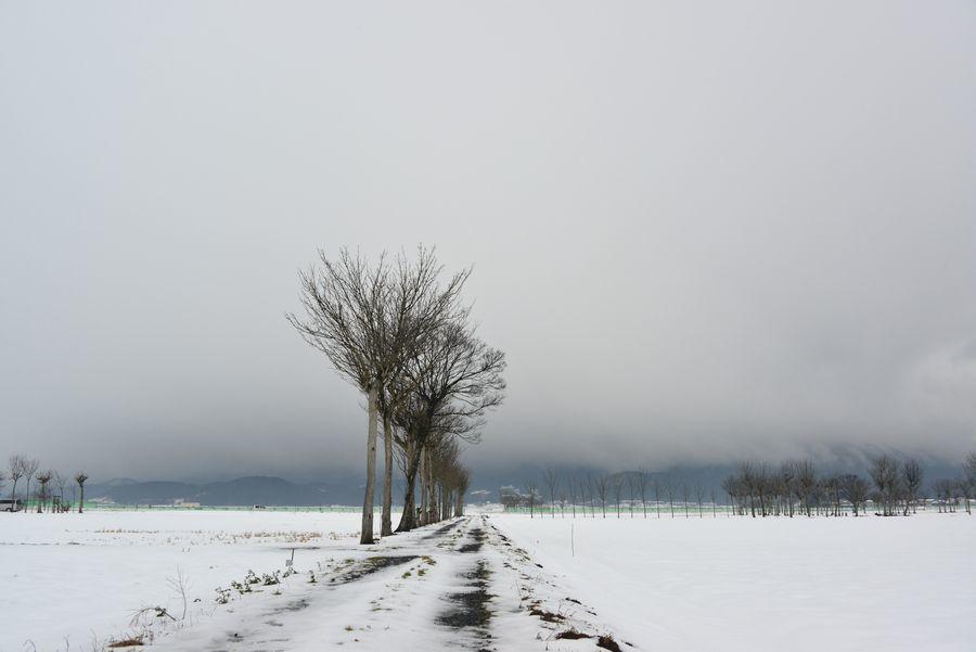 雪原のはざ木-1