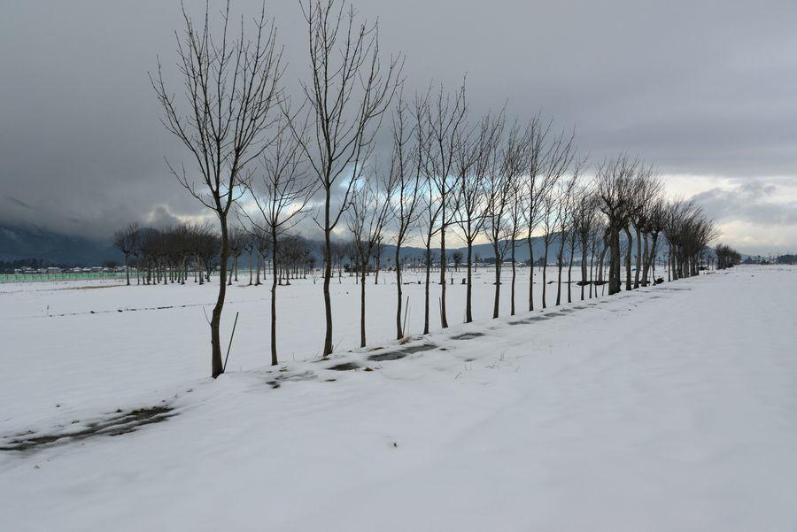 雪原のはざ木-2