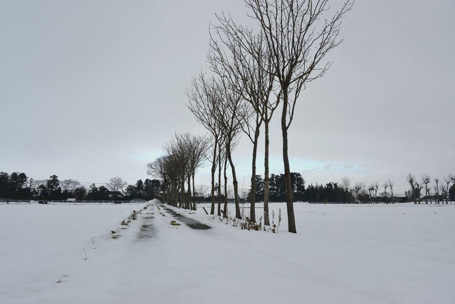 雪原のはざ木-3