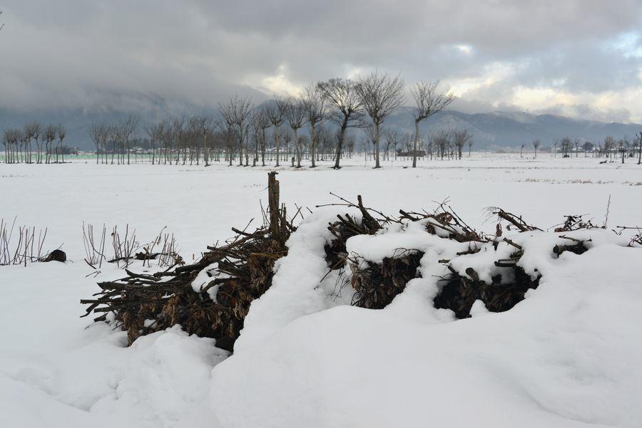 雪原のはざ木-4