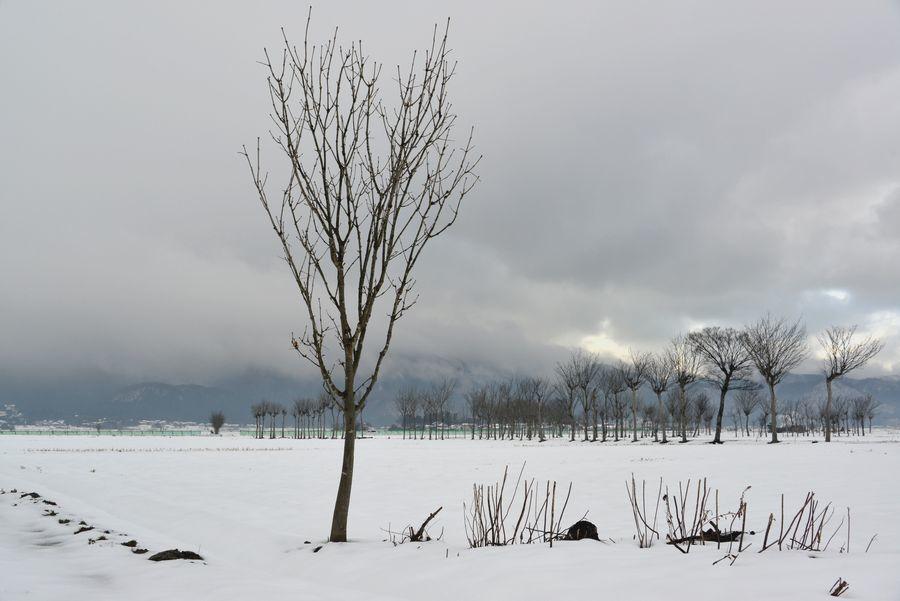 雪原のはざ木-5