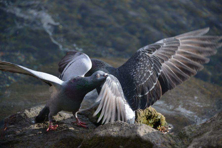 突然の鳥-3