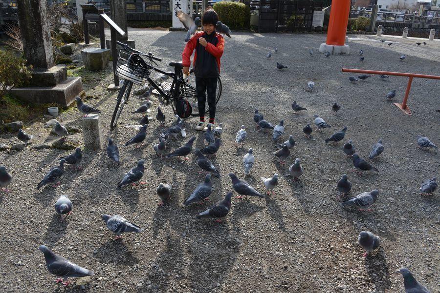 突然の鳥-5
