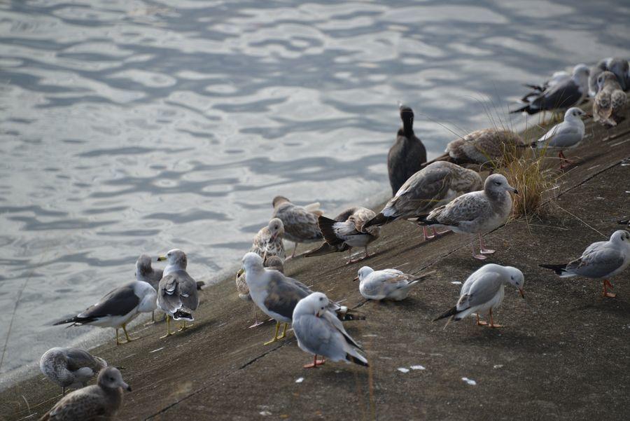 突然の鳥-6