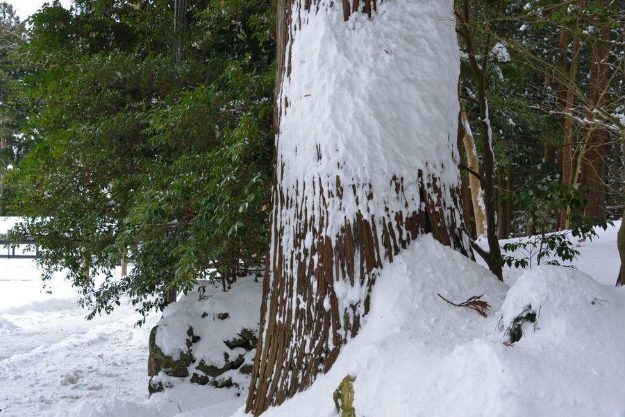 吹雪の痕跡-2