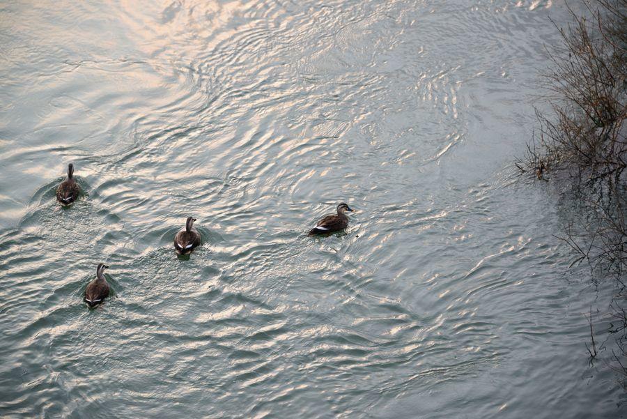 川に飛ぶ-4
