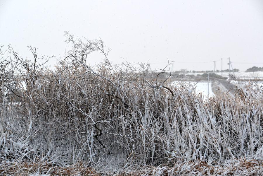 雪の藪-1