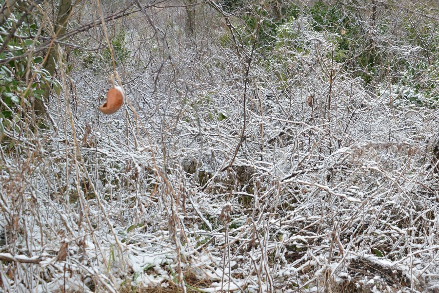 雪の藪-2