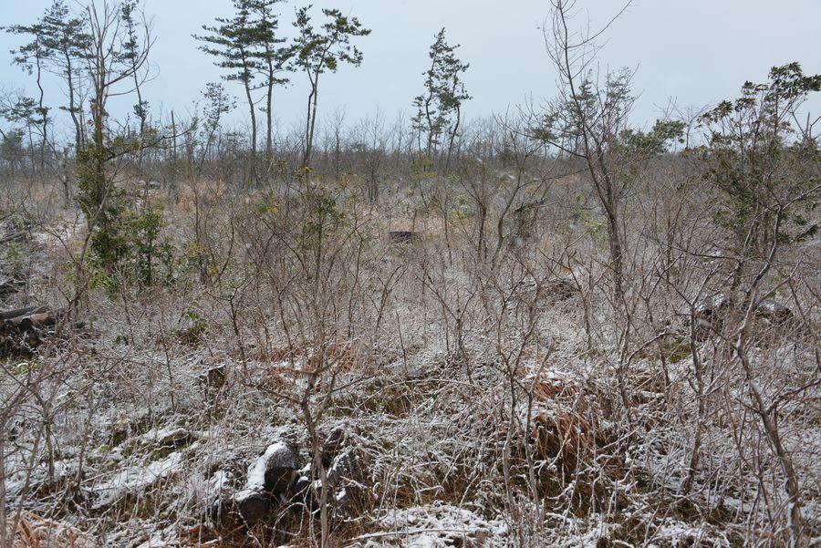 雪の藪-3