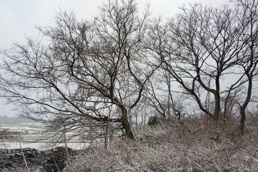 雪の藪-4