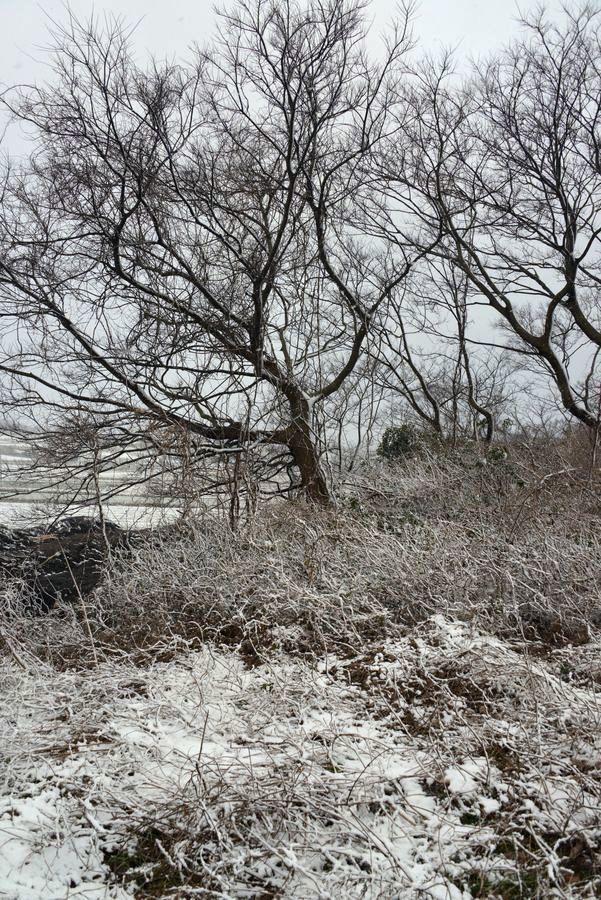 雪の藪-5