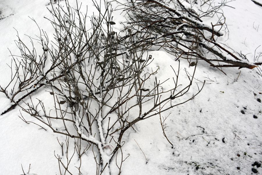 雪の城山公園-5
