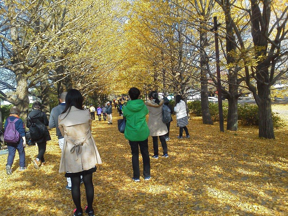 F1001022昭和記念公園11/18イチョウ並木