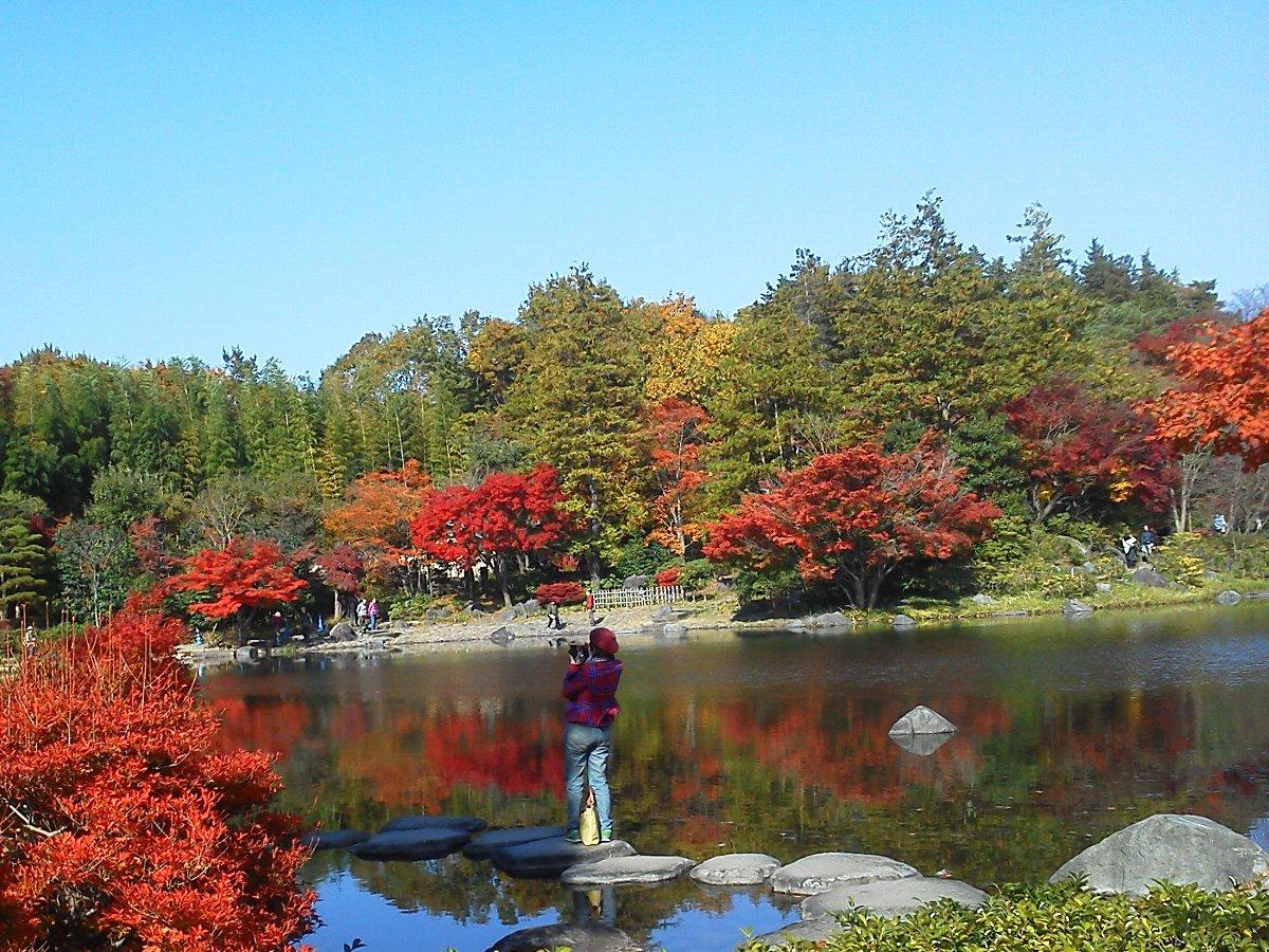 F1001057昭和記念公園11/18紅葉の日本庭園の赤い服