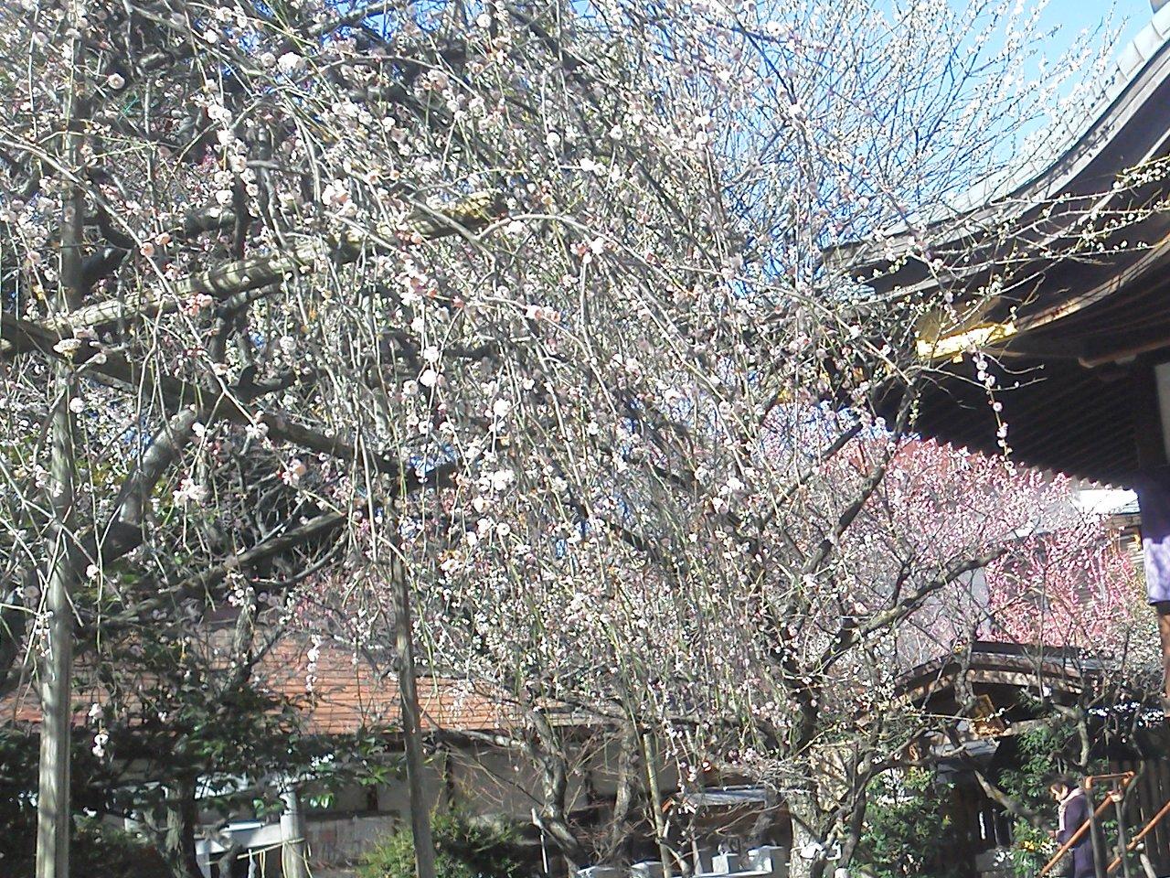 F1000154節分の小石川牛天神北野神社