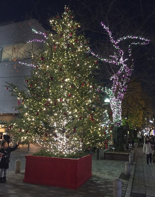 2016xmastree.jpg