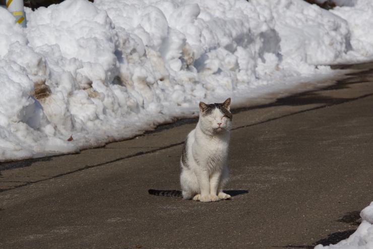 近所のどら猫