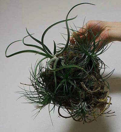 plant10.jpg