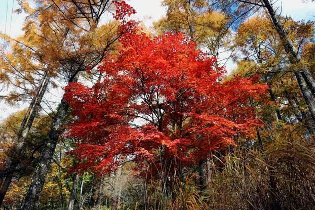 紅葉  in 長野