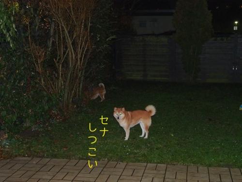 セナは非常にしつこい犬です
