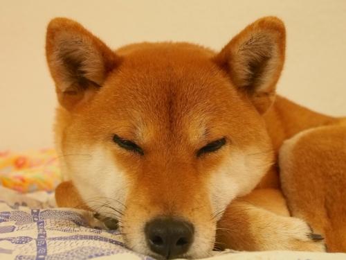 おやしゅみせな
