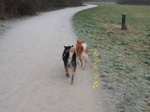 大晦日の散歩5