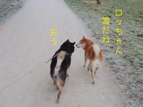 大晦日の散歩4