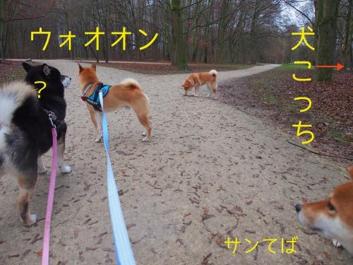 4匹で犬に遭遇