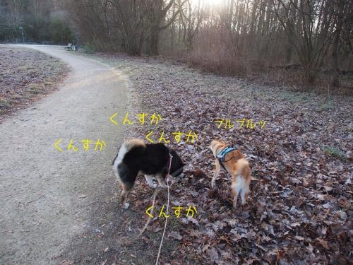 −6℃の朝散歩6