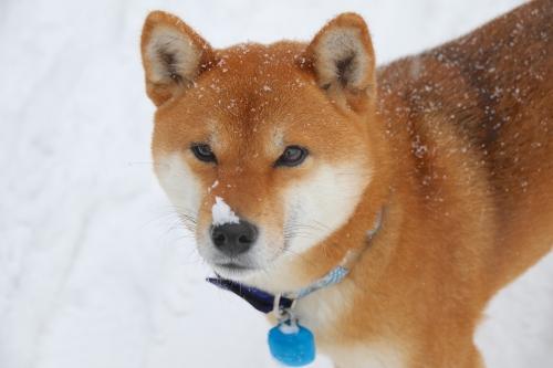 豪快に雪が降りました