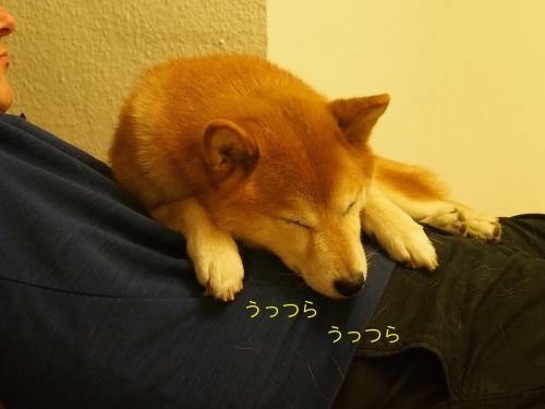 パパの上で寝始めた