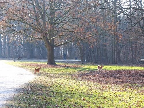 公園散歩の様子
