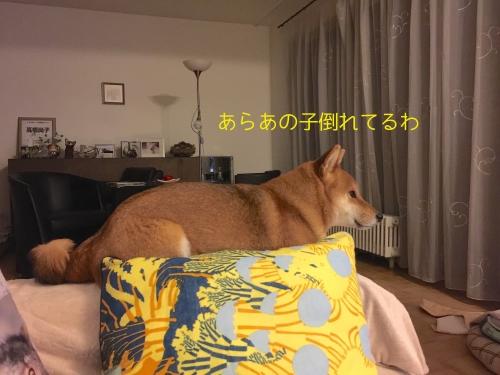 犬が死ぬシーン4