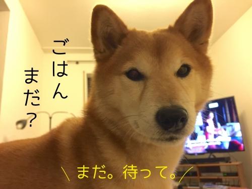 犬が死ぬシーン1