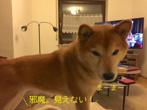 犬が死ぬシーン2