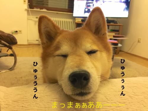 犬が死ぬシーン7