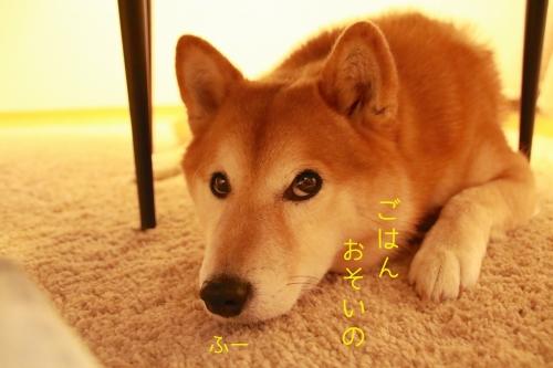 犬が死ぬシーン8