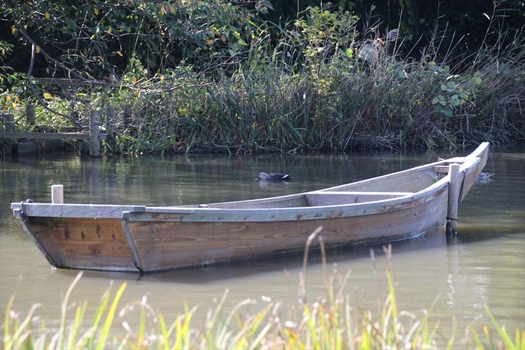 大池の手前から_3