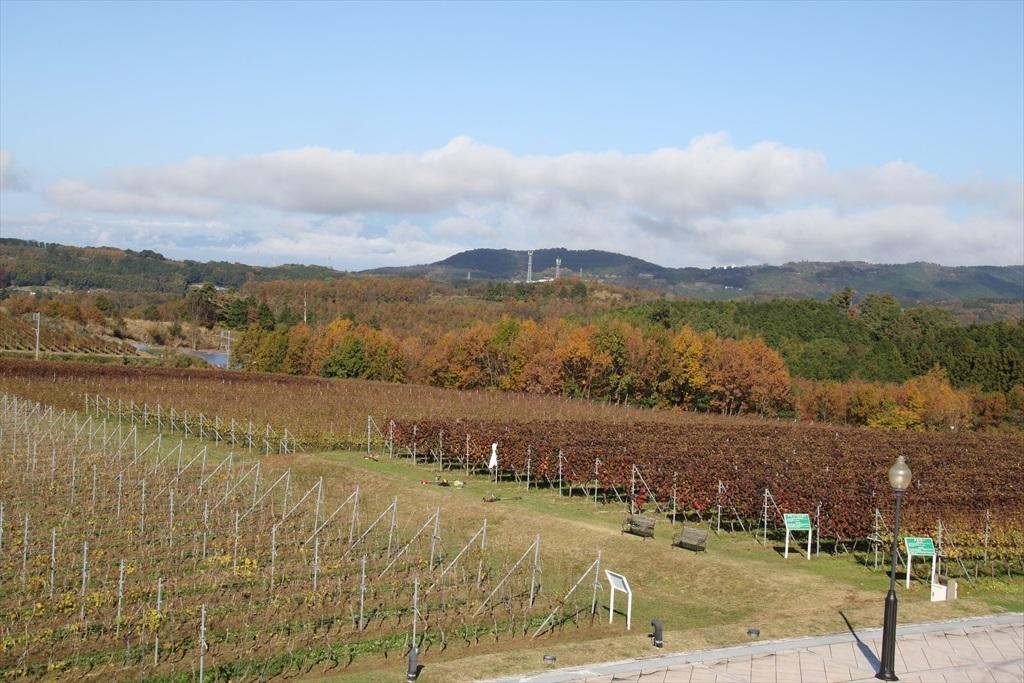 ワイン用のぶどう畑