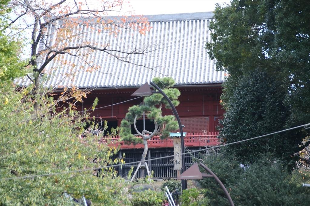 清水観音堂と月の松_3