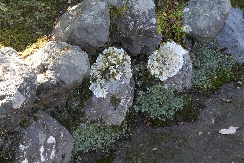 いろいろな苔が生えていた_1